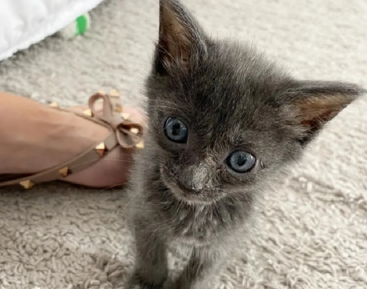 pawly gattina cure amore patricia