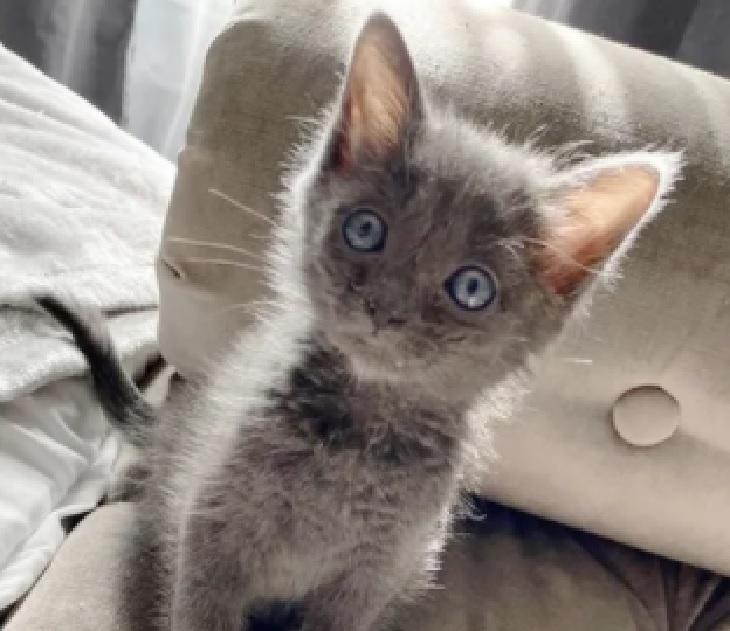pawly gattina rifugio las vegas