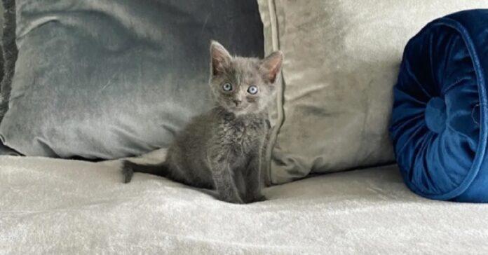 pawly gattina guarita dopo lunga attesa