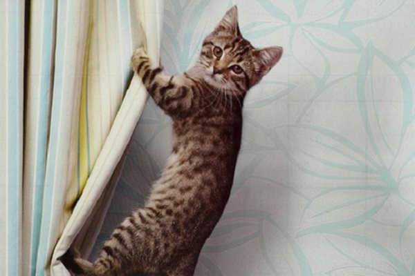 gatto gioca con tende