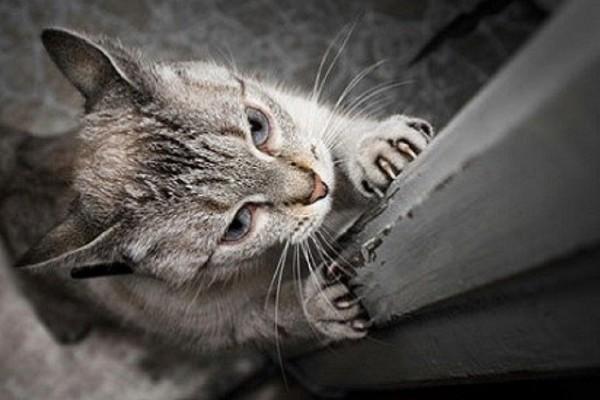 gatto graffia la porta