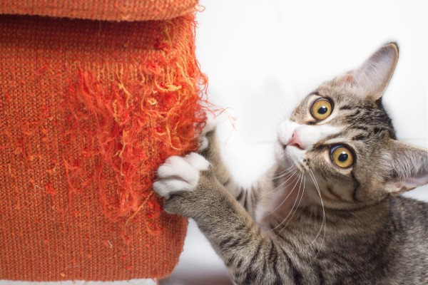 gatto si fa le unghie
