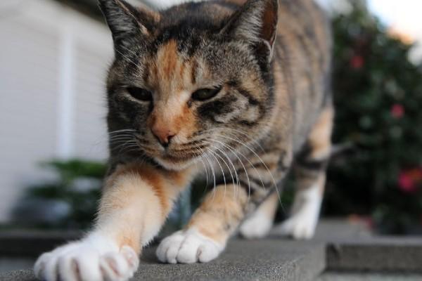 gatto che impasta