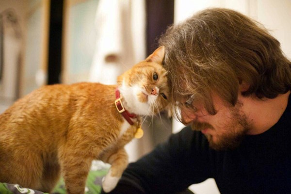 gatto che strofina la testa sul padrone