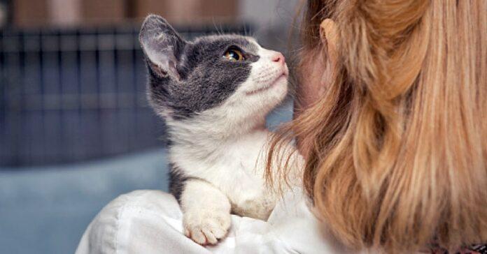 gatto in braccio alla sua padrona