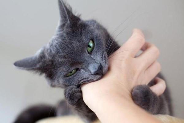 gatto che morde la mano del padrone