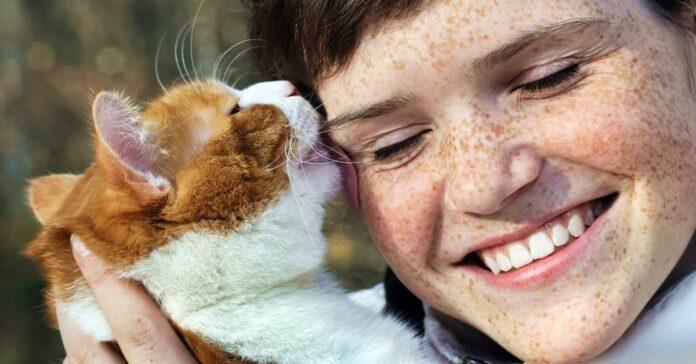 gatto lecca la faccia di una ragazza