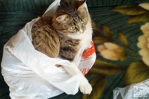 gatto dentro un sacco