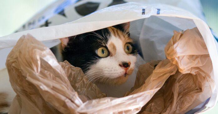 gatto dentro sacco di plastica