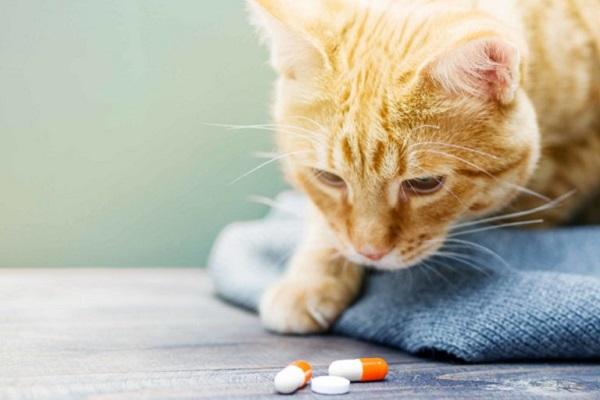 gatto e pillole