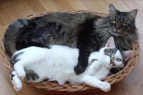 gatti nella cesta