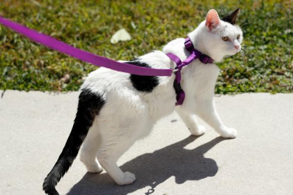 gatto con la pettorina a X