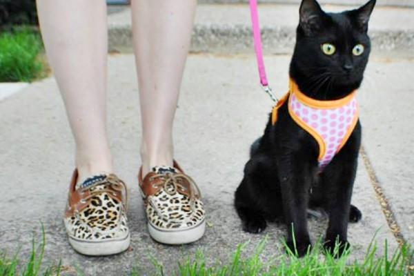 padrona con il suo gatto