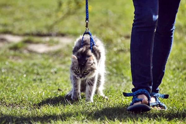 passeggiare al parco con il gatto
