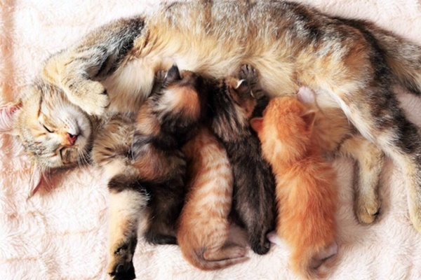 mamma che allatta i gattini
