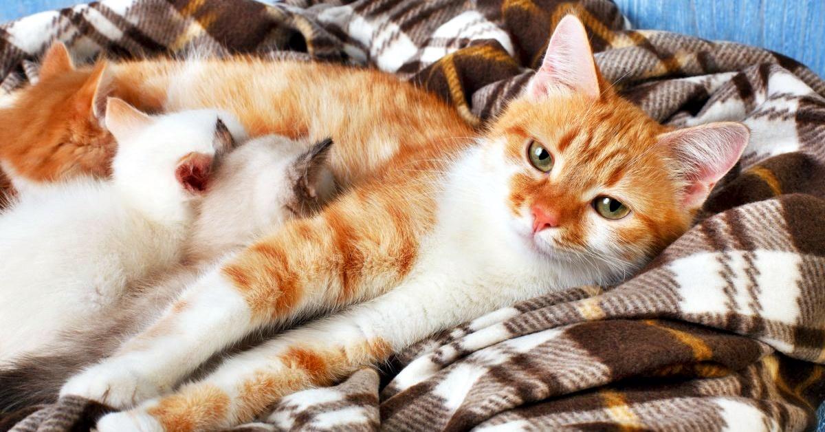 gatta che allatta i suoi gattini