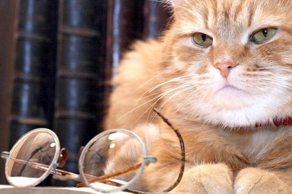 gatto saggio