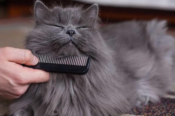 pettinare un micio a pelo lungo