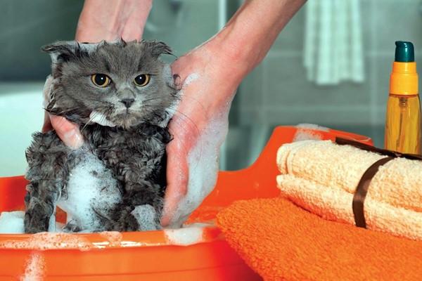 fare il bagno al gatto