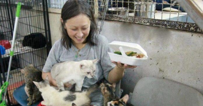 lee gattini rifugio