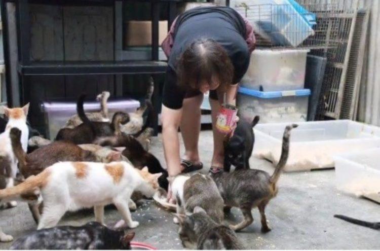 100 gattini salvataggio