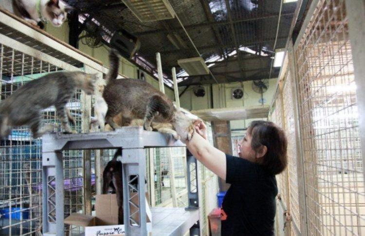 gattini salvati rifugio