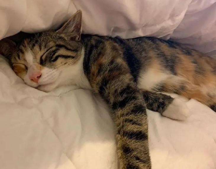 ratbag gattino percorso ostacoli