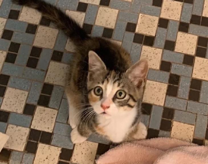 ratbag gattino entra in pizzeria