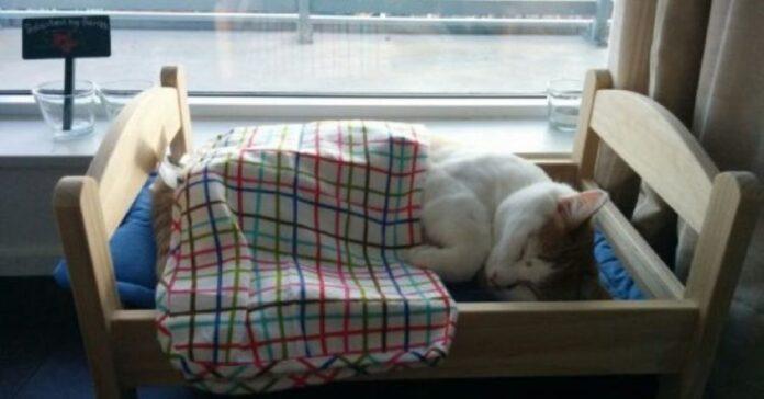 gattino ikea letto