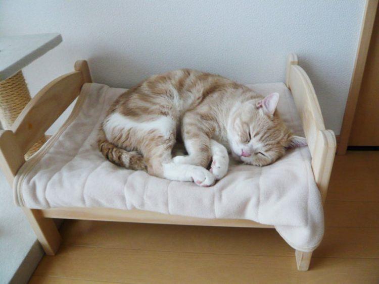 gatto pisolino foto