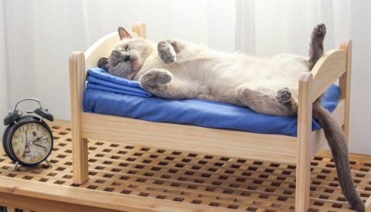 gattino riposo letto