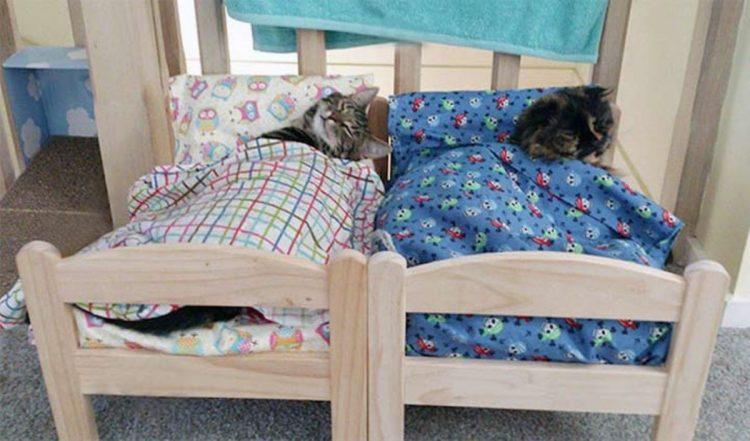 gattini lettini dormono
