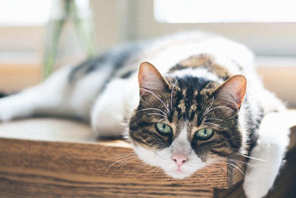 gatto che si rilassa