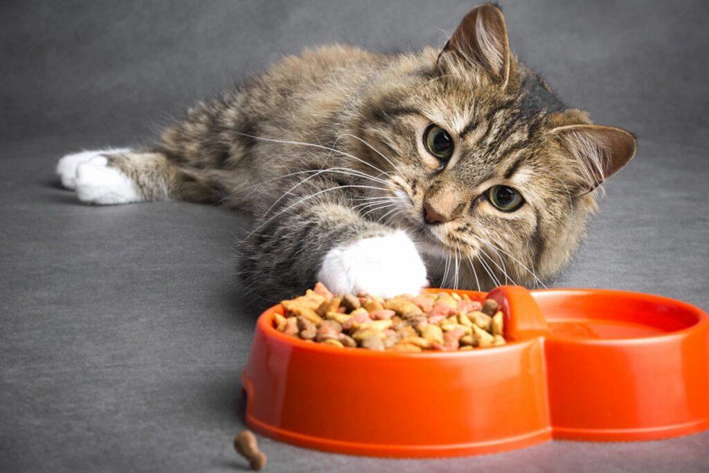 gatto che gioca con il cibo