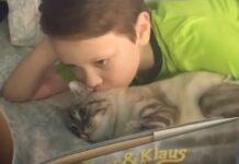 roo gattino paralizzato salvato da un ragazzino 11 anni