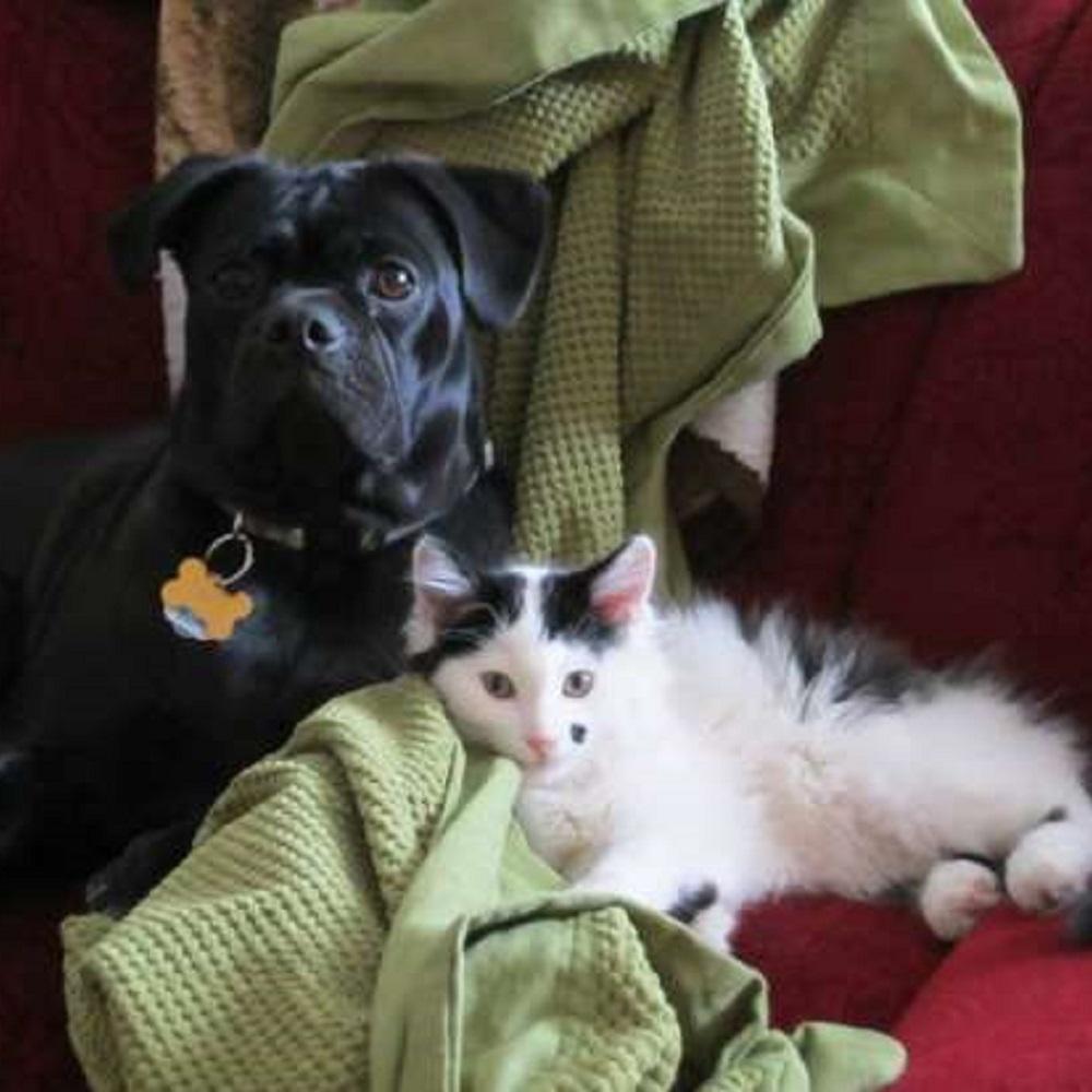 roscoe gatto opie insegnamenti