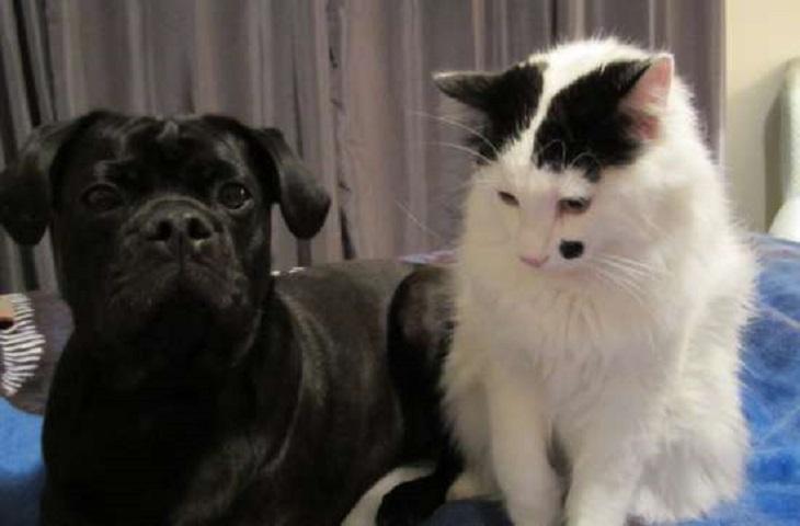 roscoe gattino legame stretto cane