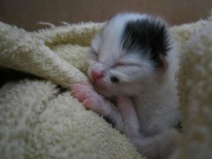 roscoe gattino james gioca giardino