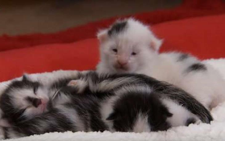 ruby gatta piccoletti appena nati