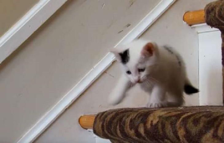 ruby moo gattino competizione