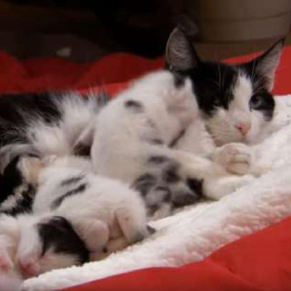 ruby mamma gatta famiglia allargata