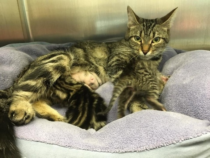 madre gattini nutre