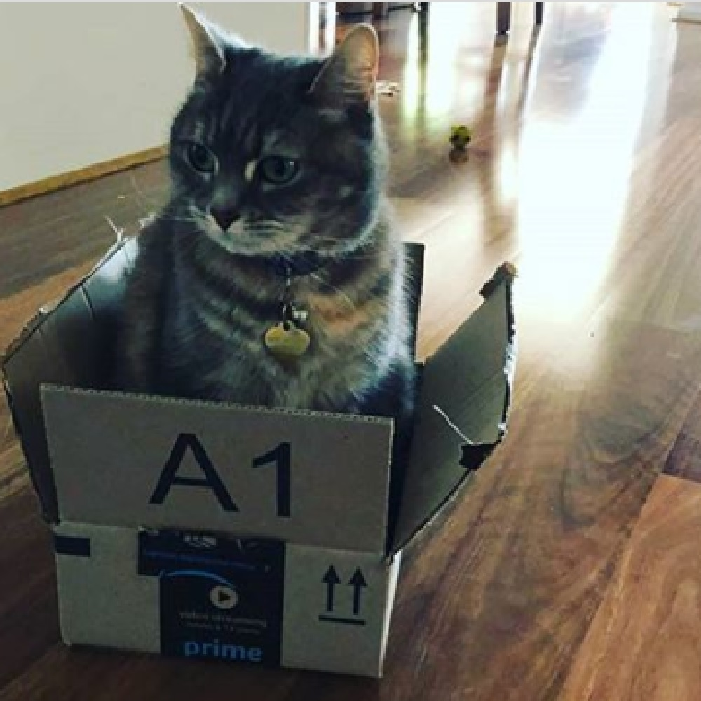 selina gatta passione scatole