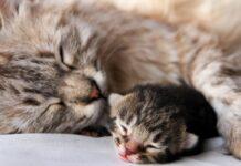 gatta mamma e figlio