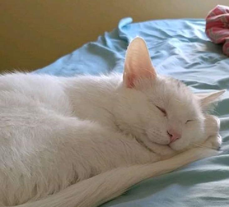 shiro gatto takabaka vita difficile