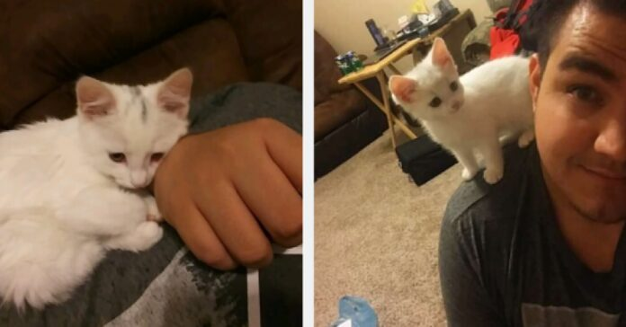 shiro gatto aiuta padre sconfiggere depressione