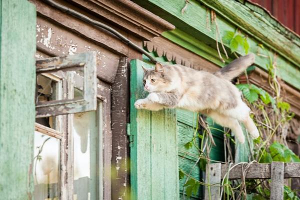 gatto che salta dalla finestra