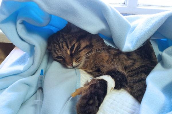 gatto ricoverato in ospedale