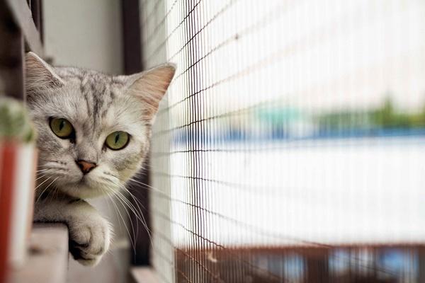 rete di protezione per i gatti