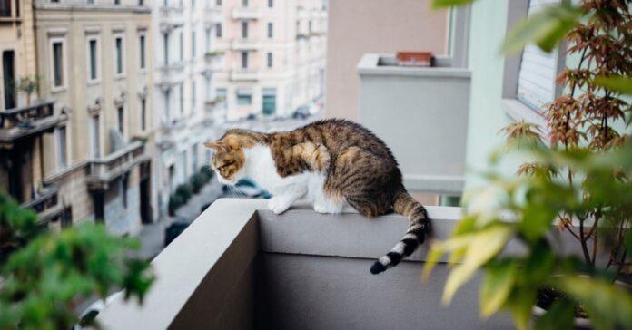 gatto sul muretto del balcone